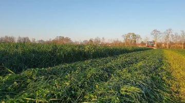 La récolte de l'herbe de A à Z chez Antoine Thibault (27)