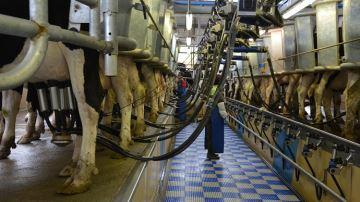 Le ralentissement des exportations met à mal la filière laitière