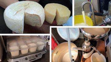 À chacun sa solution pour livrer moins de lait sans réduire sa production