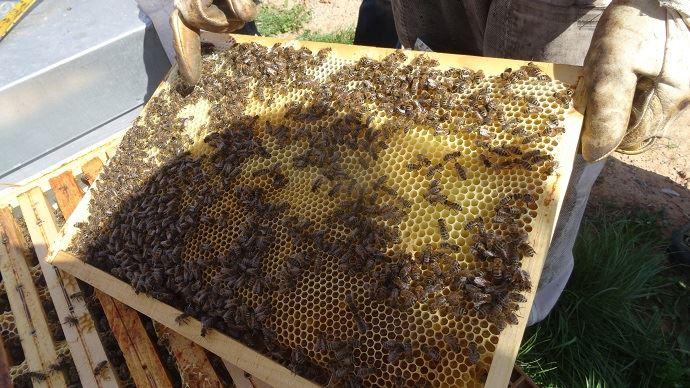 Rayon d'une ruche