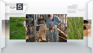 Boiteries,méteils et impacts du covid-19: les sujets majeurs cette semaine
