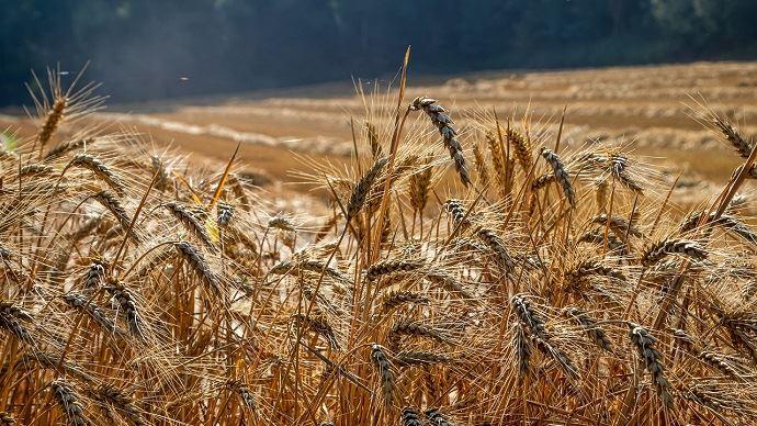 Des exports européens de blé en hausse de 63% cette année