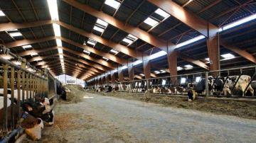 Ventilation, isolation et luminosité : les indispensables du bien-être animal
