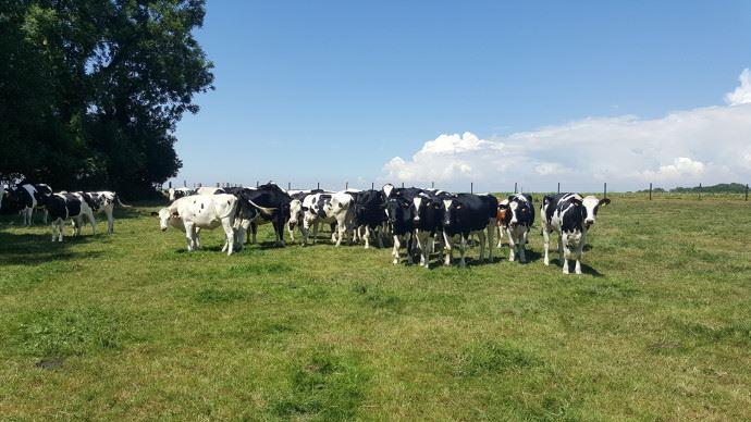 Entre incitation à réduire la production et météo peu favorable, la collecte laitière marque le pas en avril