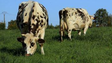 L'explosion de la production de lait bio va-t-elle faire évoluer le modèle?
