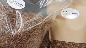 Des vers de farine pour nourrir les animaux autrement