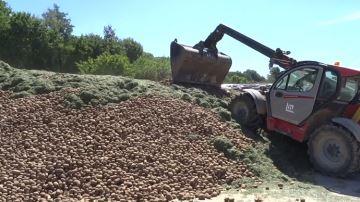 Ensilage d'herbe et pommes de terre dans unmême silo: comment faire?