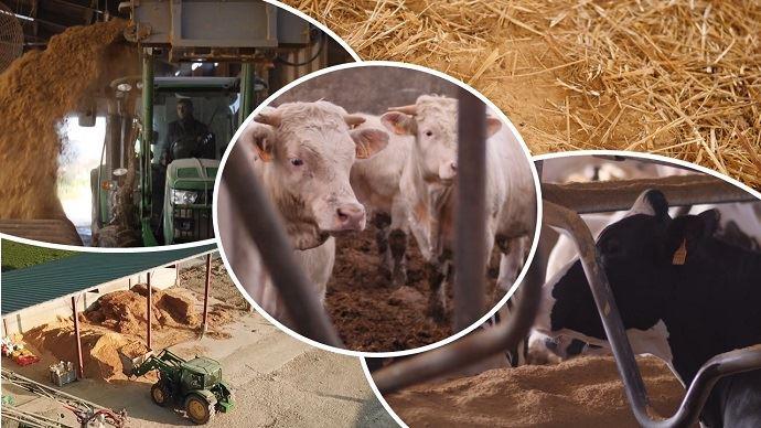 Paillage de bovins laitiers et allaitants à la Dolomie