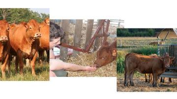 Le financement participatif pour développer son troupeau et la vente directe