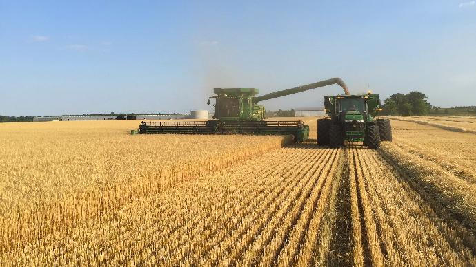 La récolte américaine de blé à moitié terminée