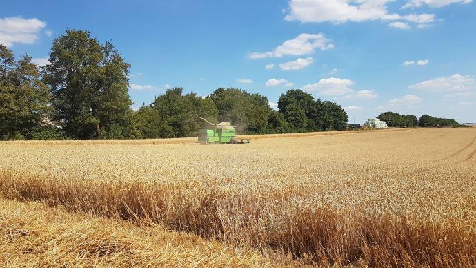 Alors que 10% des blés français sont déjà récoltés, les conditions se dégradent