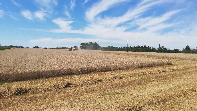 Les perspectives de production de blé continuent de se réduire en Russie