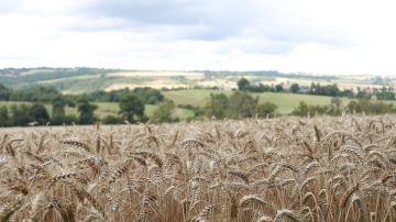 Corteva confirme ses ambitions et son engagement pour une agriculture durable