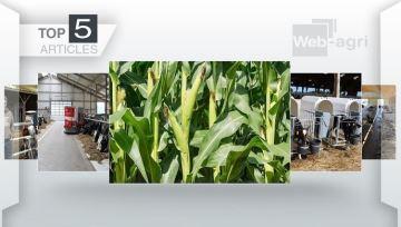 Floraison des maïs fourrage, alimentation des veaux et installation à la Une