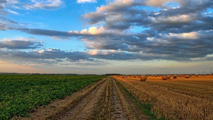 Selon les rapporteurs d'une mission d'information sur le cadre juridique des baux ruraux, 50% des baux ruraux en cours sont simplement verbaux.