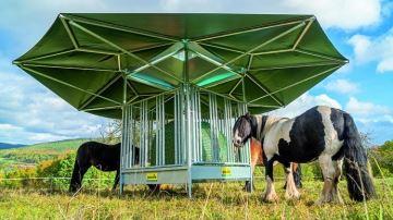 De l'ombre et de la ventilation au pré grâce au râtelier bioclimatique de Patura