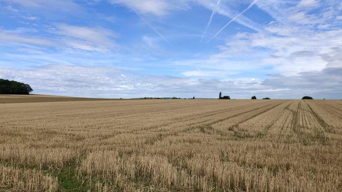 A 29,2 Mt, la récolte de blé tendre a été particulièrement faible cette année
