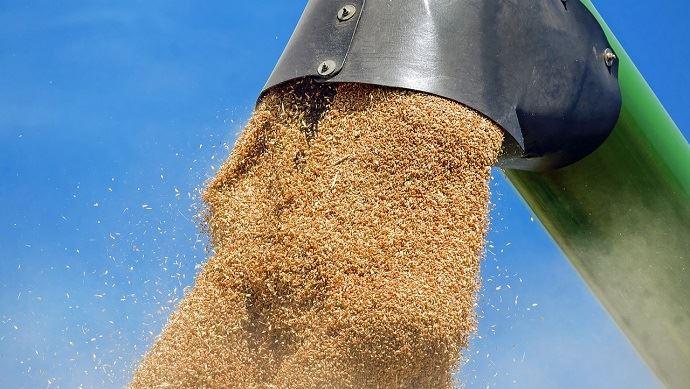 vidange de grains de la moissonneuse vers la benne