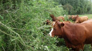 A. Messéan(02) : «Un complément de fourrage pour combler le déficit en herbe»