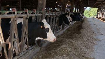 La production laitière augmente mais les marchés restent incertains