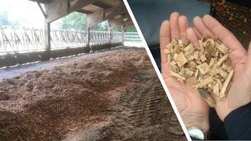 Le bois plaquettes en litière: comment l'utiliser?