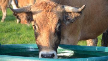 La qualité de l'eau en élevage: un paramètre à prendre en compte