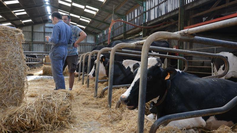 eleveurs laitiers