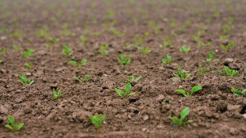 Une innovation variétale incontournable face aux défis agricoles