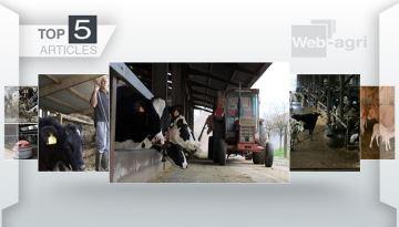 Les pistes pour réduire le temps de travail en élevage laitier à la Une