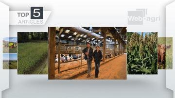 Chantier d'ensilage de maïs XXL, élevage degénisses pour tiers et sorgho en Une