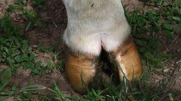 La biotine: utilité zéro pour les vaches!