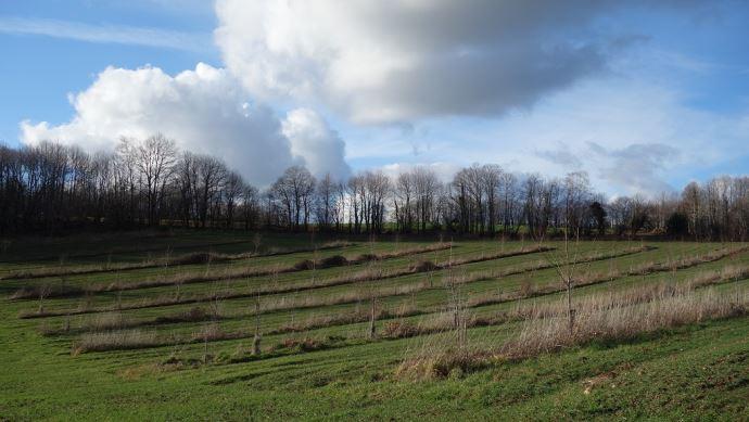 Parcelle d'agroforesterie