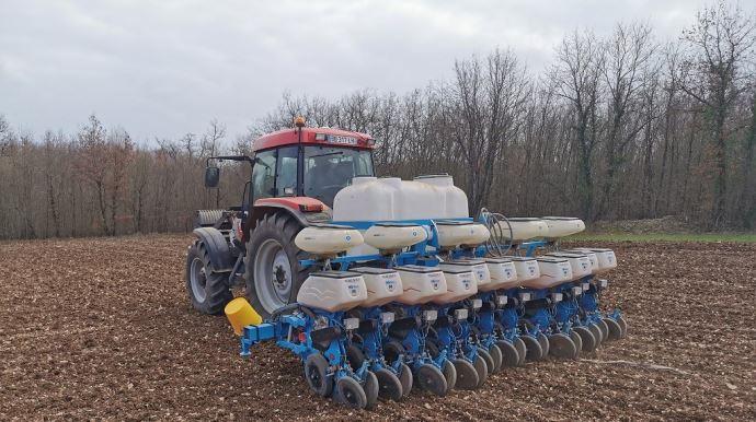 Semis de tournesol