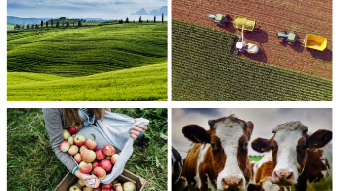 Les perspectives à court terme sont favorables pour les marchés agricoles européens, indique un rapport trimestriel de la Commission europenne