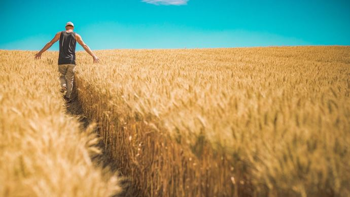 agriculteur champs de blé