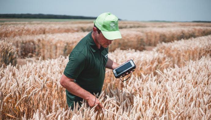 Essais blé hybride