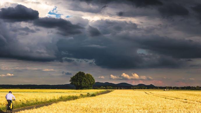 champs de blé nuage tempête