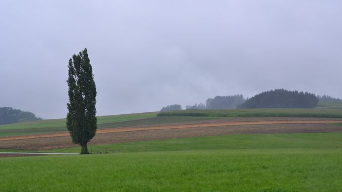 champs pluie