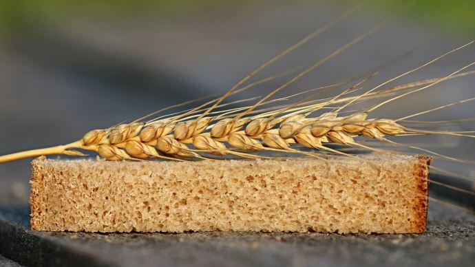 La bonne qualité de la récolte de blé tendre 2021 a été néanmoins pénalisée par des niveaux de poids spécifiques décenvants.