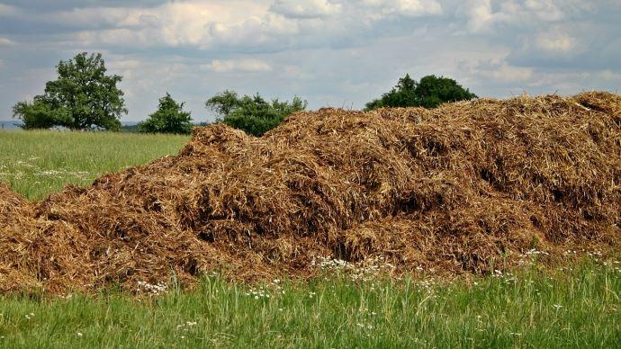 Le stockage du fumier au champ est soumis à de nombreuses règles.