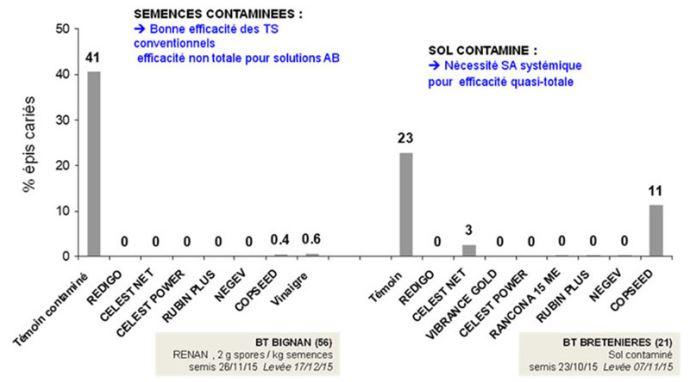Evaluation comparée (en% d'épis cariés) de traitements de semences fongicides vis-à-vis de la carie commune, selon deux sources de contamination