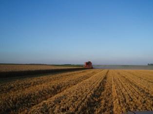 Chicago hebdo : le blé bondit, le soja monte au plus haut depuis 2 ans