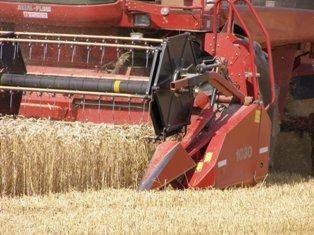 Blé, maïs, soja en hausse, soutenus par le climat