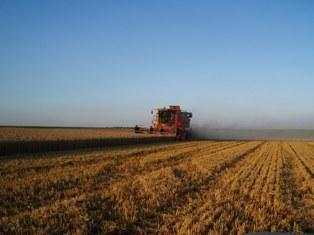 Maïs et blé se replient en raison de faibles exportations