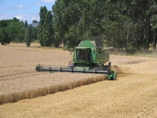 Production de céréales en baisse de 12 % selon le ministère de l'agriculture