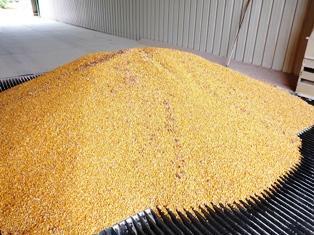Maïs, blé et soja se replient dans un marché calme