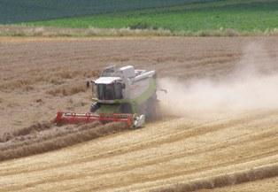 L'accord dans la zone euro dope le blé, le maïs et le soja