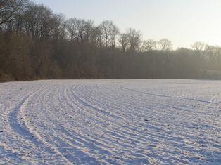 La vague de froid sur l'Europe inquiète les marchés agricoles