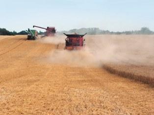Le marché agricole se stabilise dans l'attente d'indicateurs