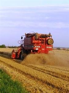 Estimée à seulement 34 Mt, la production de blé n'est pas à l'abri d'un nouveau déficit hydrique